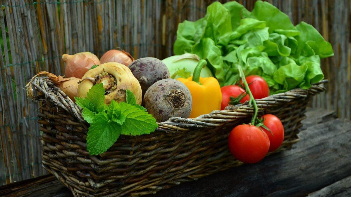 Panier de légumes bio : salade, tomates, poivrons, betteraves et oignons.